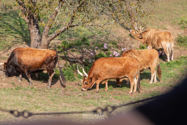 Boda-Pazo-San-Tirso00039